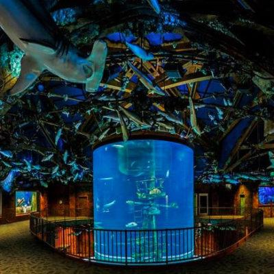 Wonders of Wildlife cylindrical aquarium